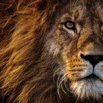 Höhle der Löwen Cashback